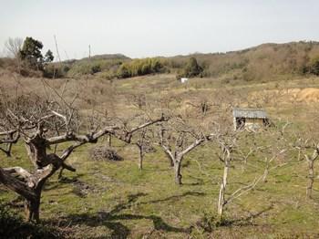 柿畑上から.jpg